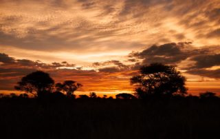 Mangweni Private Game Reserve 19