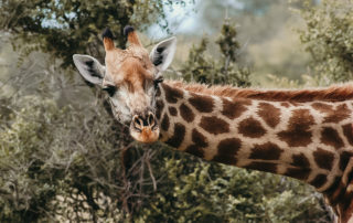 Mangweni Private Game Reserve - Game Drives1