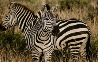 Mangweni Private Game Reserve - Game Drives3