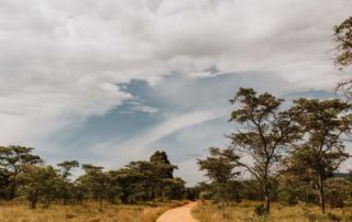 Mangweni Private Game Reserve - Game Drives4
