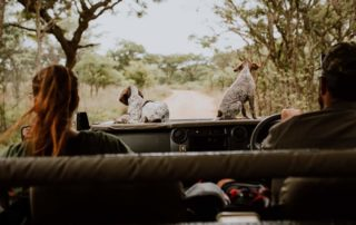 Mangweni Private Game Reserve - Game Drives6